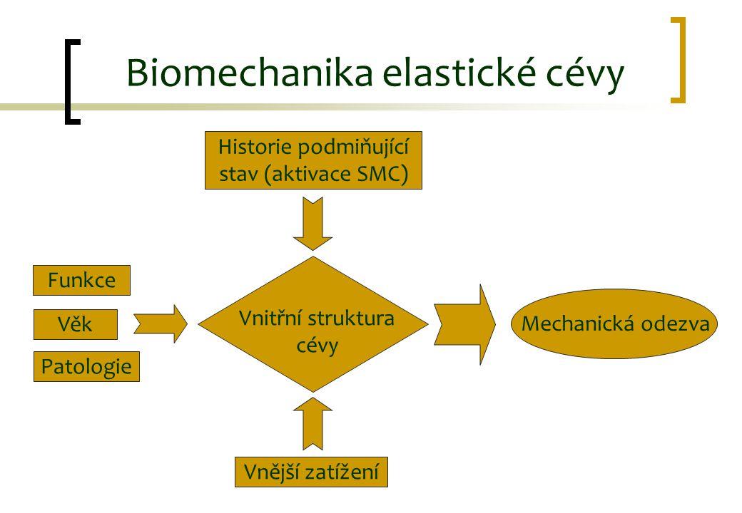 Mechanická odezva Funkce Věk Patologie Historie podmiňující stav (aktivace SMC) Vnitřní struktura cévy Vnější zatížení Biomechanika elastické cévy