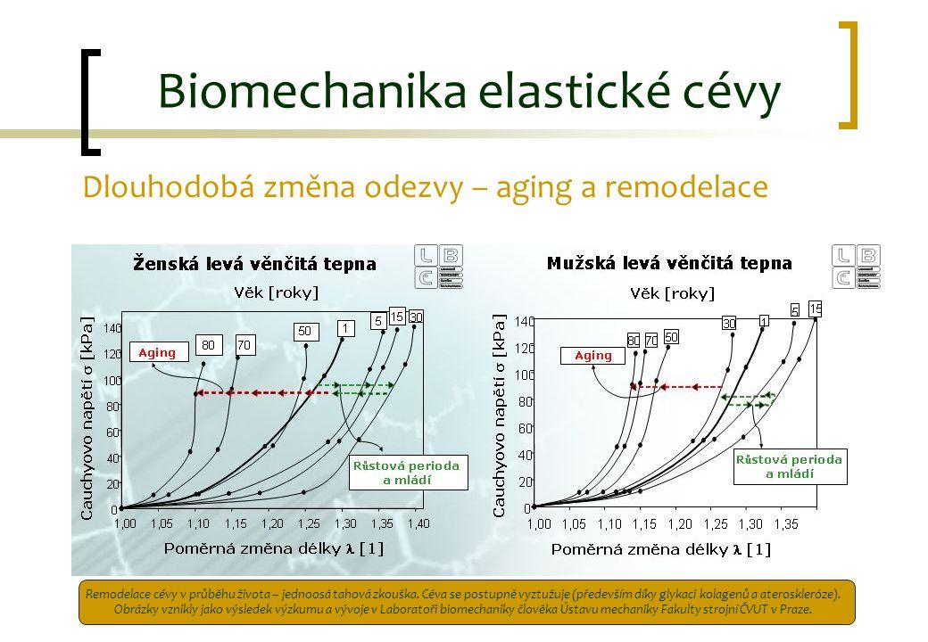 Biomechanika elastické cévy Dlouhodobá změna odezvy – aging a remodelace Remodelace cévy v průběhu života – jednoosá tahová zkouška. Céva se postupně