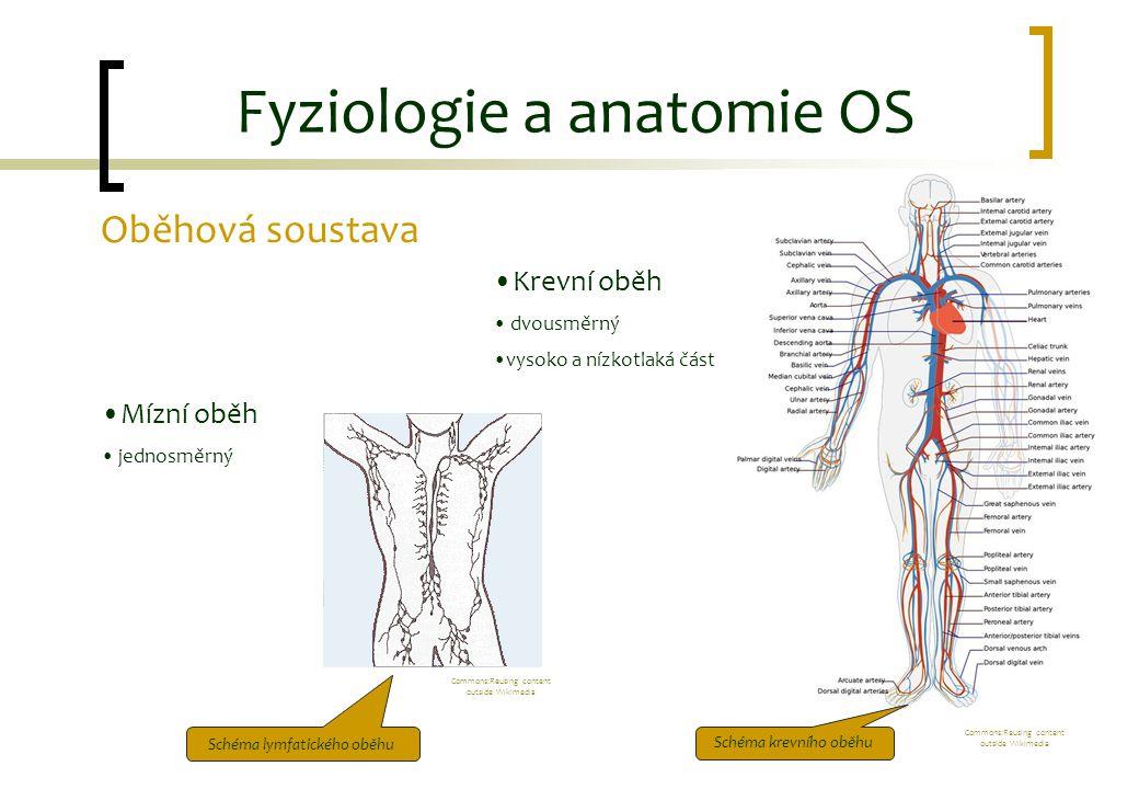 Fyziologie a anatomie OS Oběhová soustava Mízní oběh jednosměrný Krevní oběh dvousměrný vysoko a nízkotlaká část Schéma krevního oběhu Schéma lymfatic