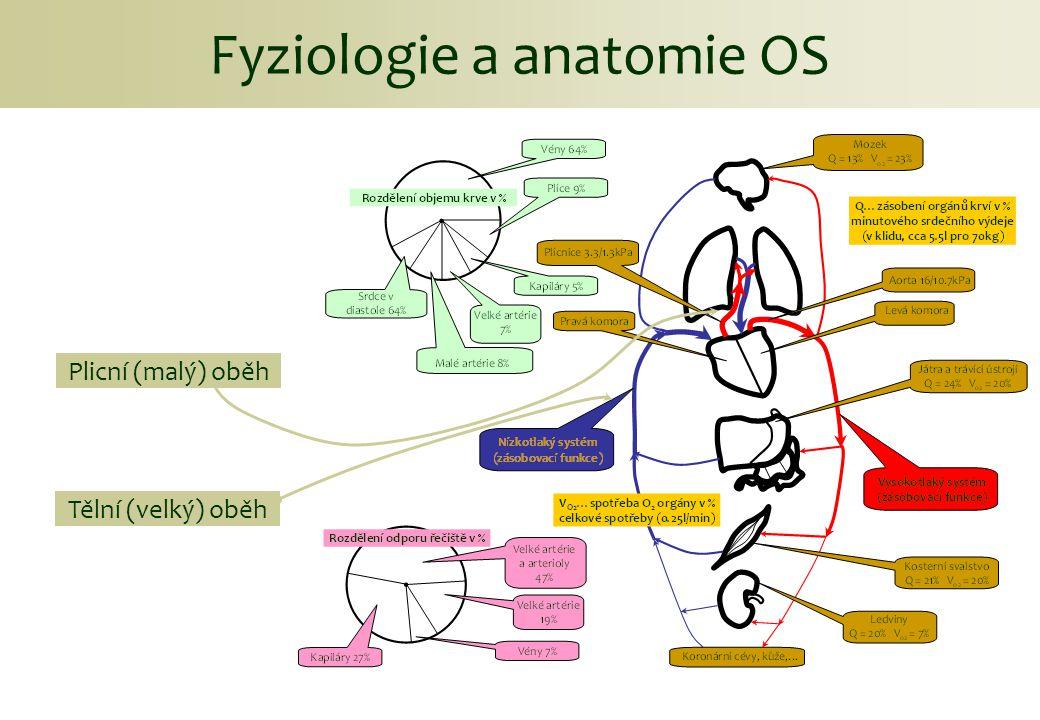 Viskoelasticita Biomechanika elastické cévy Závislost na rychlosti deformace.