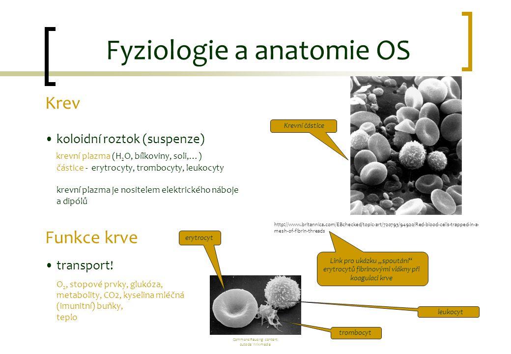 Fyziologie a anatomie OS Krev koloidní roztok (suspenze) krevní plazma (H 2 O, bílkoviny, soli,…) částice - erytrocyty, trombocyty, leukocyty krevní p