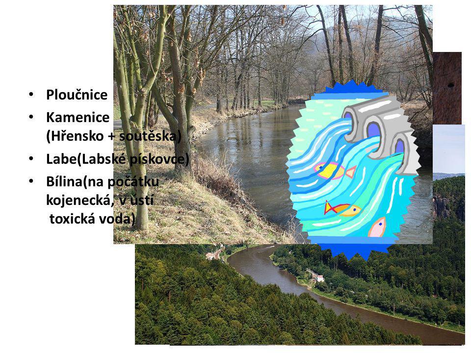 Řeky Ploučnice Kamenice (Hřensko + soutěska) Labe(Labské pískovce) Bílina(na počátku kojenecká, v ústí toxická voda)