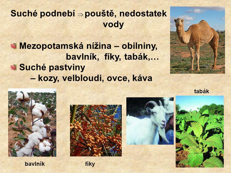 Suché podnebí  pouště, nedostatek vody Mezopotamská nížina – obilniny, bavlník, fíky, tabák,… Suché pastviny – kozy, velbloudi, ovce, káva bavlníkfík