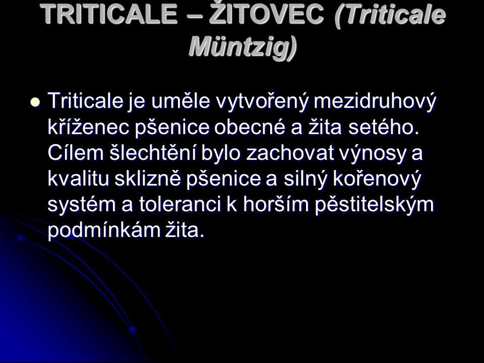 TRITICALE – ŽITOVEC (Triticale Müntzig) Triticale je uměle vytvořený mezidruhový kříženec pšenice obecné a žita setého.