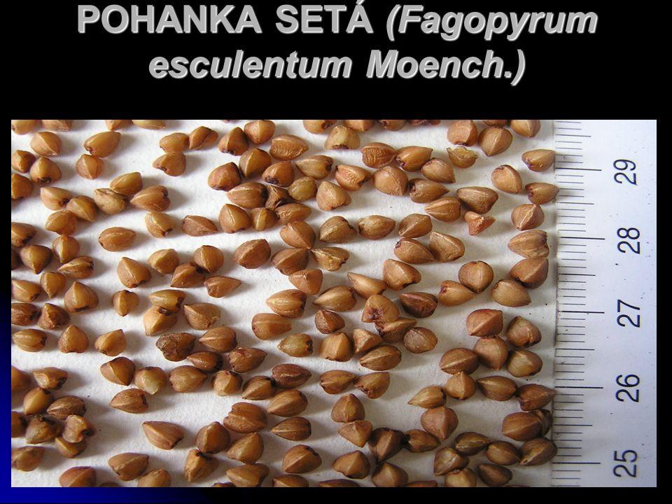 POHANKA SETÁ (Fagopyrum esculentum Moench.)