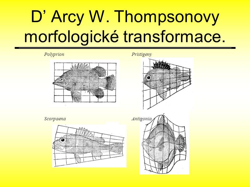 D' Arcy W. Thompsonovy morfologické transformace. Polyprion ScorpaenaAntigonia Pristigeny