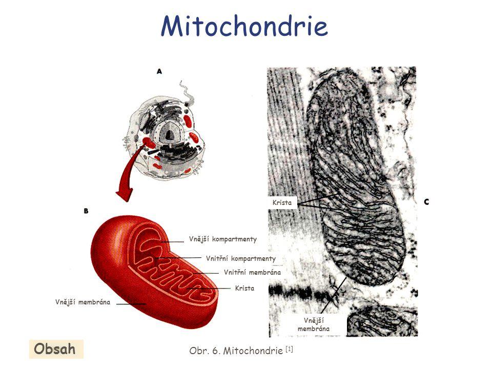 Mitochondrie Obr.6.