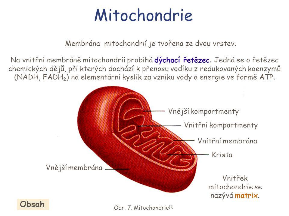 Mitochondrie Membrána mitochondrií je tvořena ze dvou vrstev.