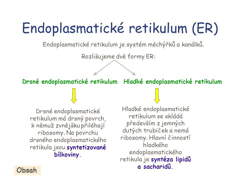Endoplasmatické retikulum (ER) Drsné endoplasmatické retikulum má drsný povrch, k němuž zvnějšku přiléhají ribosomy.