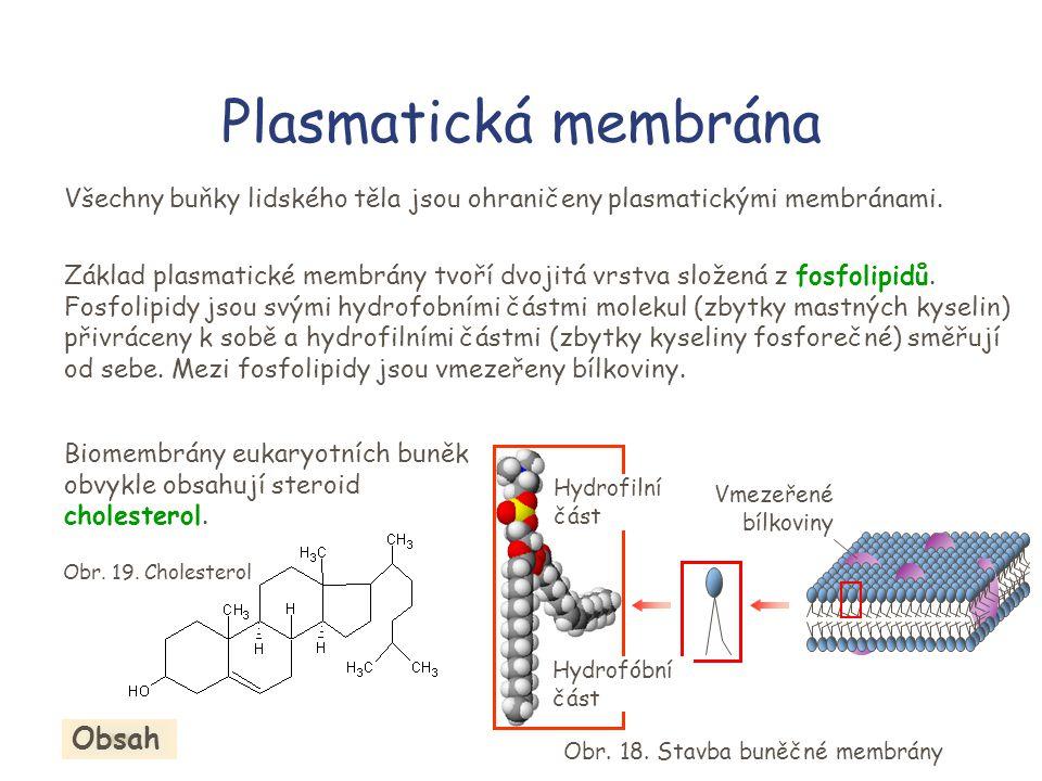 Plasmatická membrána Všechny buňky lidského těla jsou ohraničeny plasmatickými membránami.