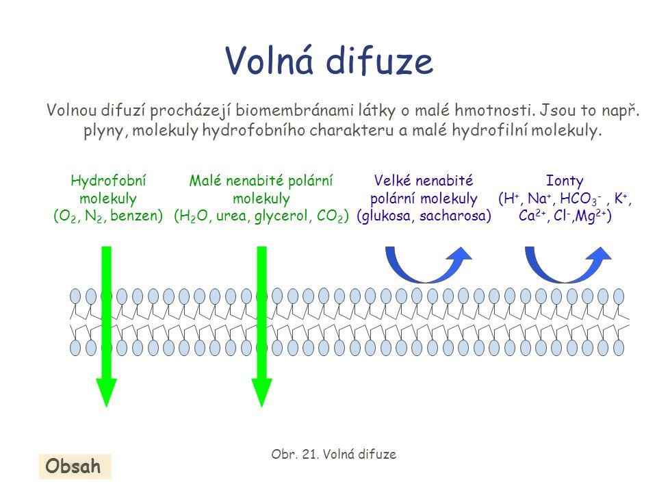 Volná difuze Volnou difuzí procházejí biomembránami látky o malé hmotnosti.
