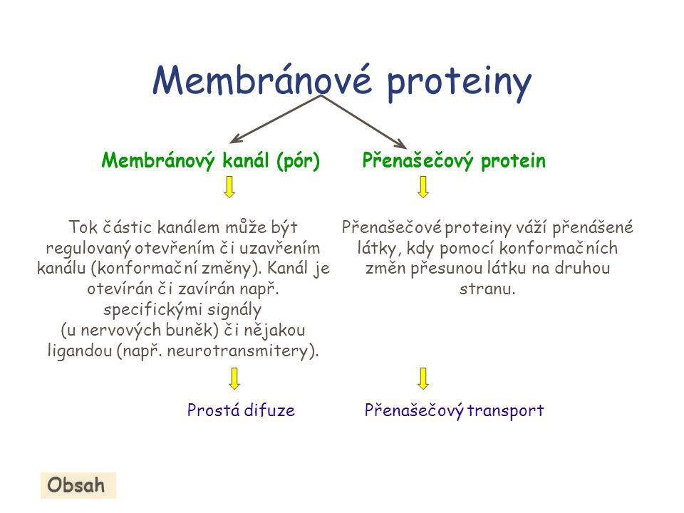Membránové proteiny Membránový kanál (pór)Přenašečový protein Přenašečové proteiny váží přenášené látky, kdy pomocí konformačních změn přesunou látku na druhou stranu.