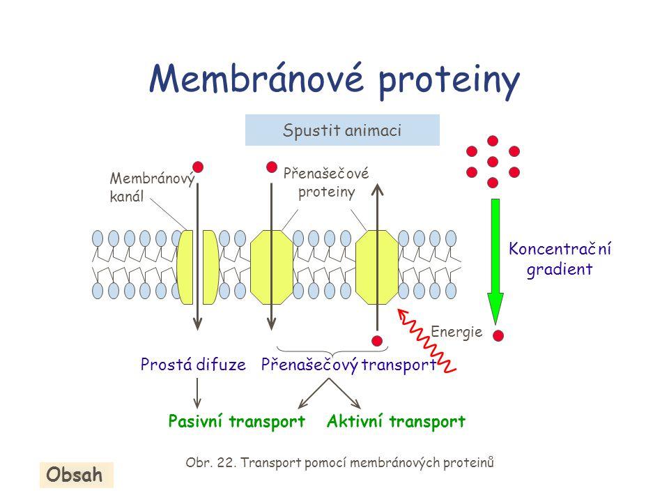 Membránové proteiny Koncentrační gradient Energie Prostá difuze Pasivní transportAktivní transport Přenašečové proteiny Membránový kanál Přenašečový transport Obr.