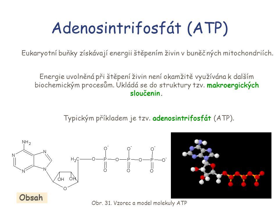Adenosintrifosfát (ATP) Eukaryotní buňky získávají energii štěpením živin v buněčných mitochondriích.