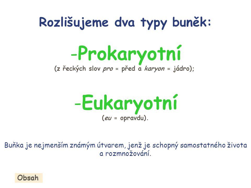 -P-Prokaryotní (z řeckých slov pro = před a karyon = jádro); -E-Eukaryotní (eu = opravdu).