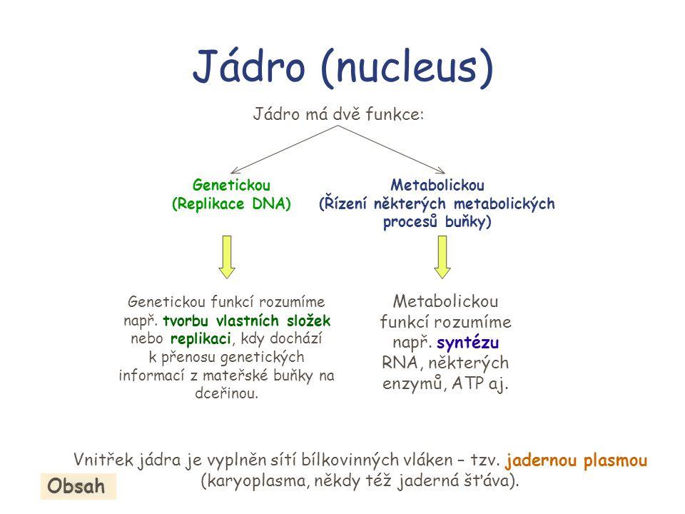 Jadérko (nucleolus) Jadérko se nachází uvnitř jádra v karyoplasmě.