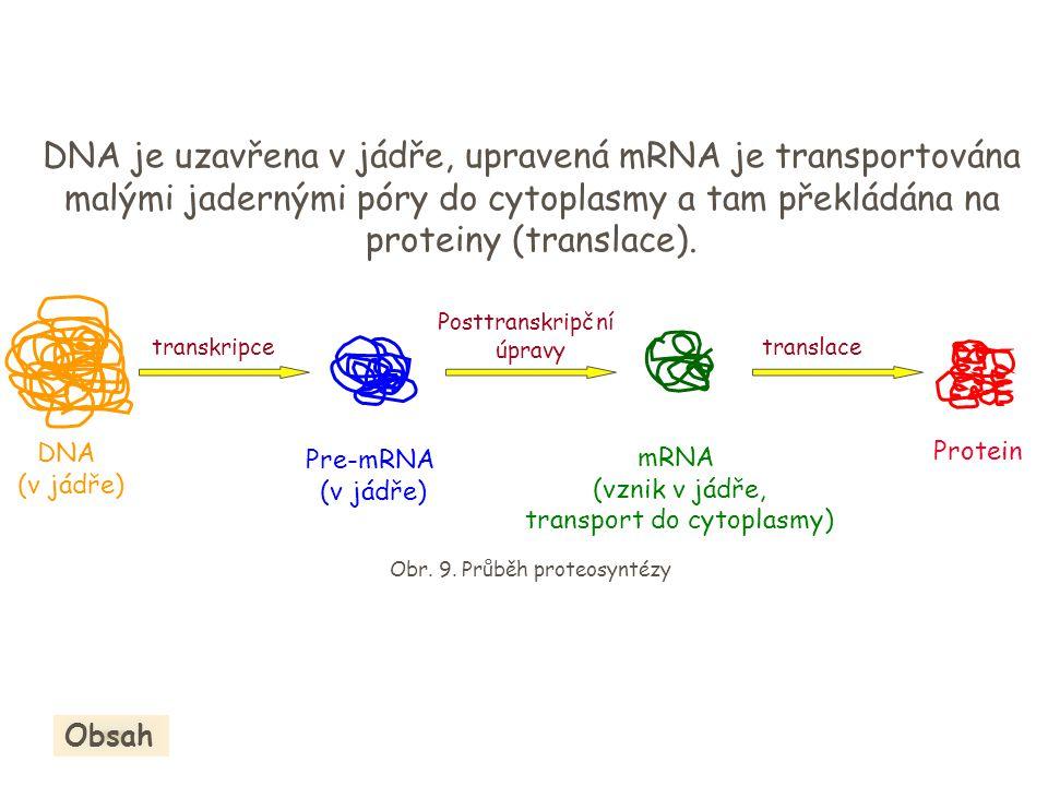transkripce Protein DNA (v jádře) Pre-mRNA (v jádře) Posttranskripční úpravy mRNA (vznik v jádře, transport do cytoplasmy) translace DNA je uzavřena v