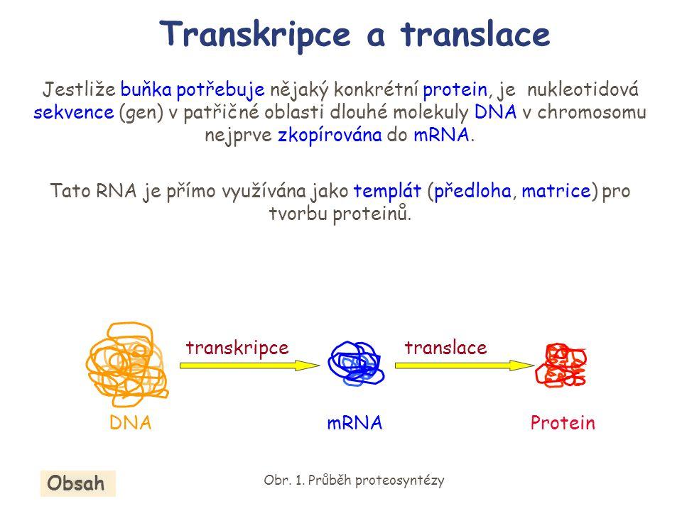 Transkripce a translace Jestliže buňka potřebuje nějaký konkrétní protein, je nukleotidová sekvence (gen) v patřičné oblasti dlouhé molekuly DNA v chr