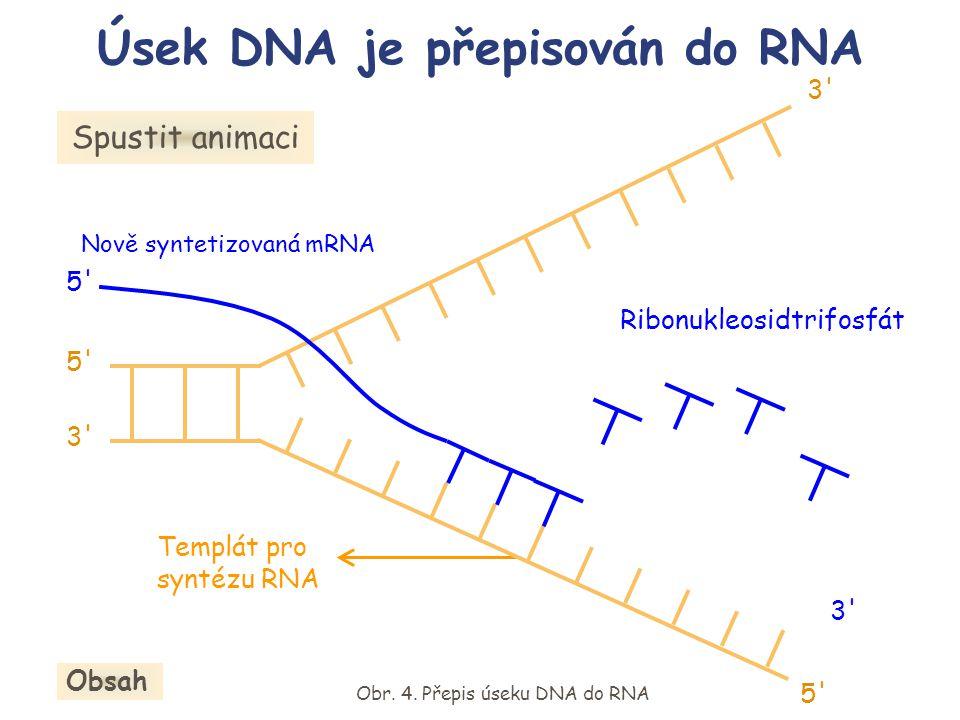 Templát pro syntézu RNA Nově syntetizovaná mRNA Ribonukleosidtrifosfát Spustit animaci Obr. 4. Přepis úseku DNA do RNA Úsek DNA je přepisován do RNA O