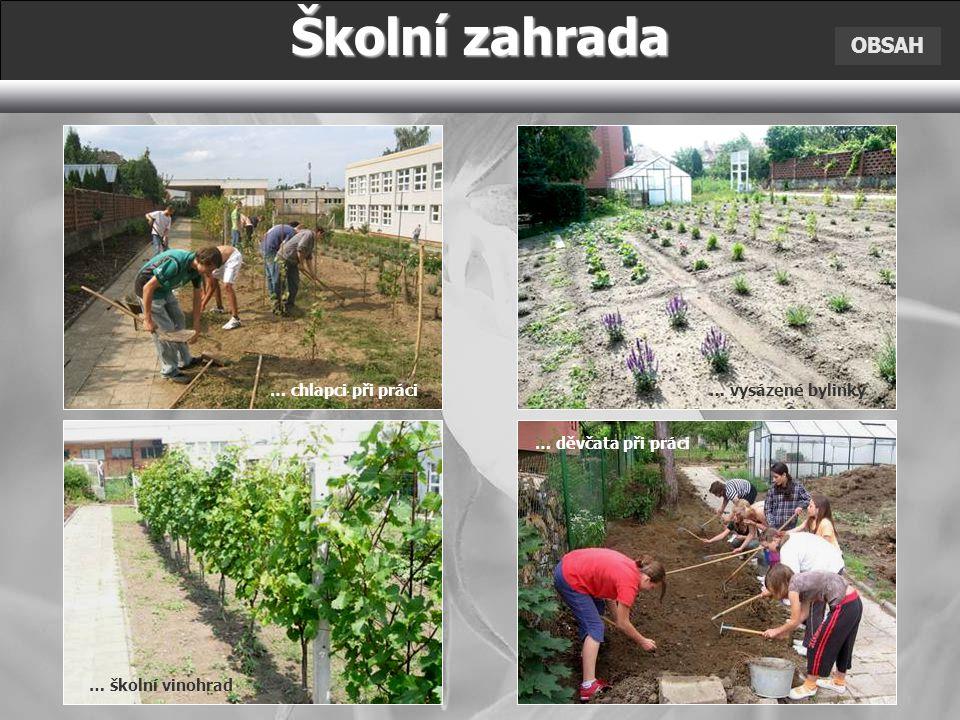 Školní zahrada OBSAH … chlapci při práci … školní vinohrad … děvčata při práci … vysázené bylinky