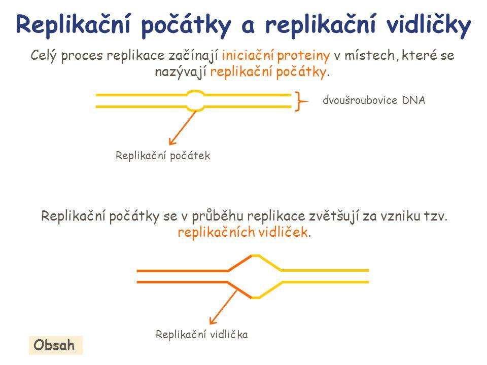 Průběh replikace Obsah 5 3 5 Vedoucí řetězec Váznoucí řetězec 5 3