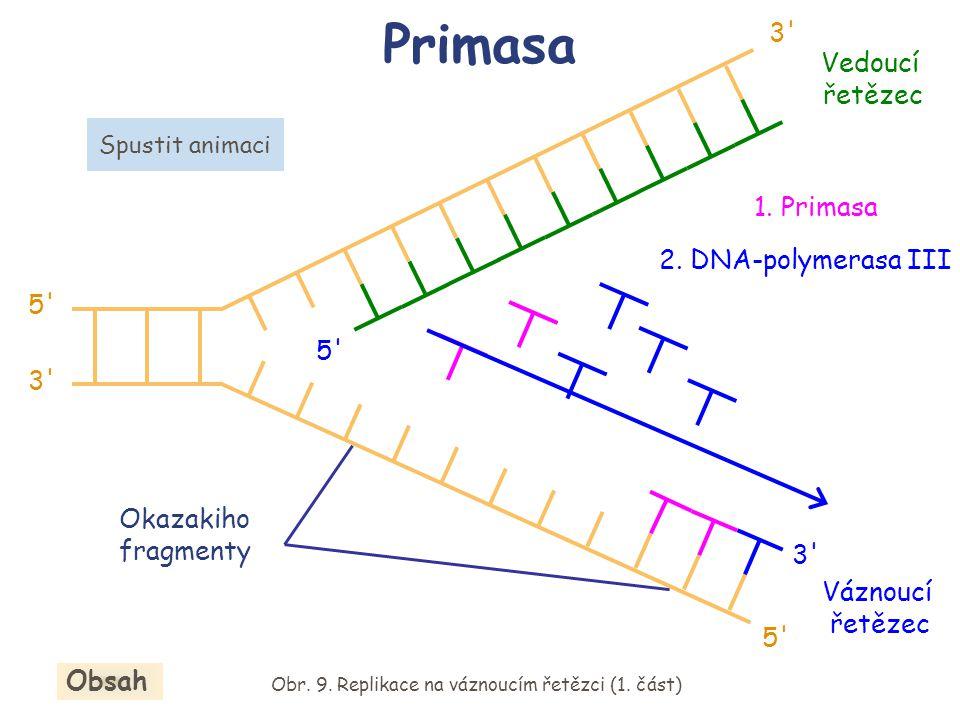Replikace je proces semikonzervativní Obr. 13. Dceřinná vlákna DNA Obsah 5 3 5 3 5 3 5