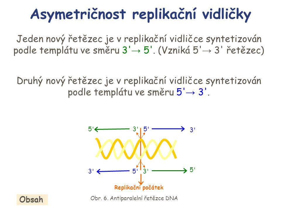 Jeden nový řetězec je v replikační vidličce syntetizován podle templátu ve směru 3' → 5'. (Vzniká 5' → 3' řetězec) Druhý nový řetězec je v replikační