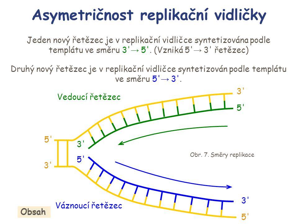 Jeden nový řetězec je v replikační vidličce syntetizována podle templátu ve směru 3' → 5'. (Vzniká 5' → 3' řetězec) Druhý nový řetězec je v replikační