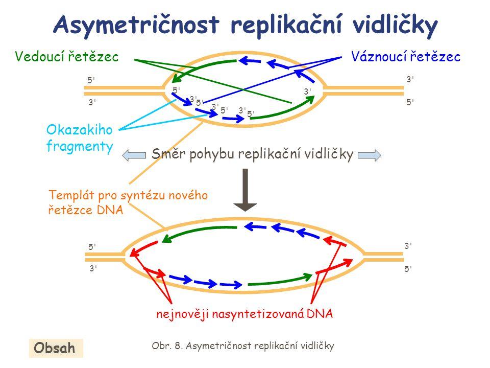 Obr. 8. Asymetričnost replikační vidličky Váznoucí řetězec Okazakiho fragmenty 5'5' 5'5'3'3' 3'3' Vedoucí řetězec Asymetričnost replikační vidličky 5'