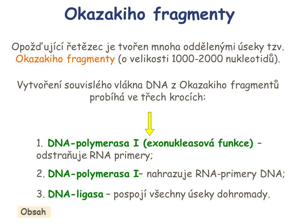 Okazakiho fragmenty Opožďující řetězec je tvořen mnoha oddělenými úseky tzv. Okazakiho fragmenty (o velikosti 1000-2000 nukleotidů). Vytvoření souvisl