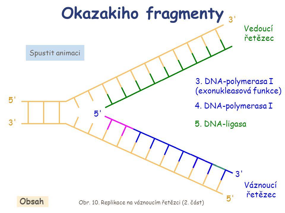 5. DNA-ligasa 3. DNA-polymerasa I (exonukleasová funkce) 4. DNA-polymerasa I Okazakiho fragmenty Obr. 10. Replikace na váznoucím řetězci (2. část) Obs