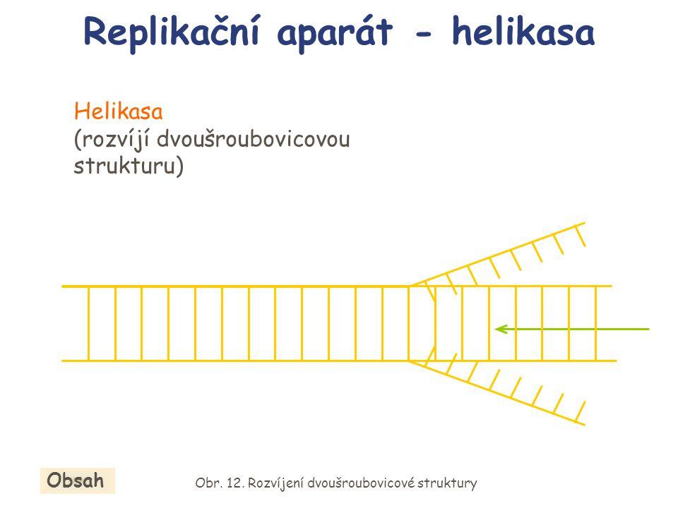 Helikasa (rozvíjí dvoušroubovicovou strukturu) Replikační aparát - helikasa Obr. 12. Rozvíjení dvoušroubovicové struktury Obsah