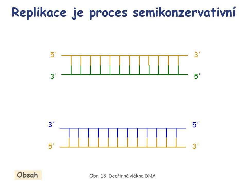 Replikace je proces semikonzervativní Obr. 13. Dceřinná vlákna DNA Obsah 5' 3' 5' 3' 5' 3' 5'