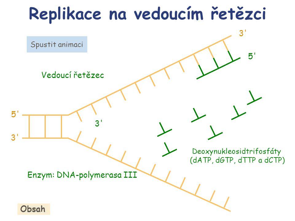 Replikace na vedoucím řetězci 3' Enzym: DNA-polymerasa III Spustit animaci Deoxynukleosidtrifosfáty (dATP, dGTP, dTTP a dCTP) Obsah 5' Vedoucí řetězec