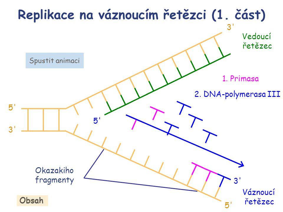 Replikace na váznoucím řetězci (1. část) Obsah Váznoucí řetězec 5' 3' 5' 3' Okazakiho fragmenty 1. Primasa 2. DNA-polymerasa III Spustit animaci Vedou