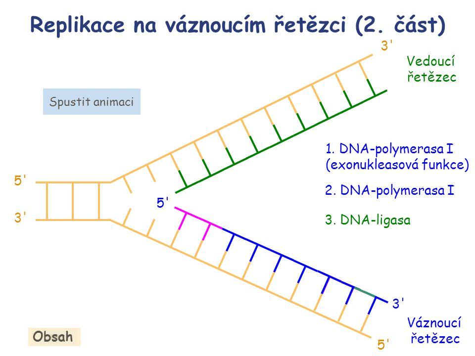 Replikace na váznoucím řetězci (2. část) Obsah 3. DNA-ligasa 1. DNA-polymerasa I (exonukleasová funkce) 2. DNA-polymerasa I Váznoucí řetězec 5' 3' 5'