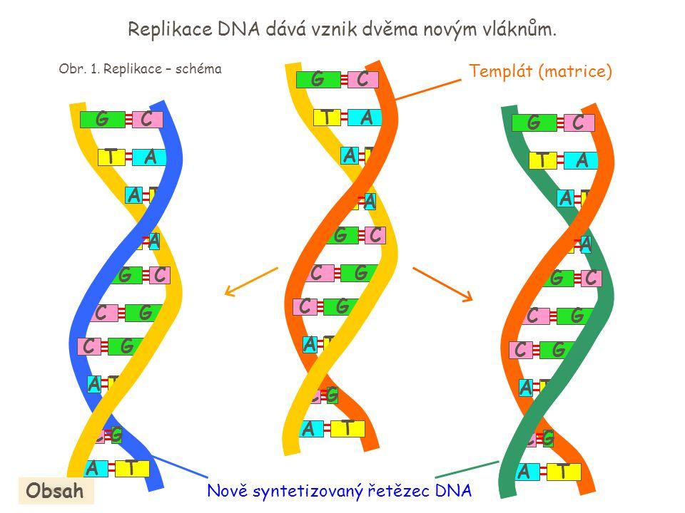 A T T G GC G T A C GC T A A C C A T G A T T G GC G T A C GC T A A C C A T G A T T G GC G T A C GC T A A C C A T G Nově syntetizovaný řetězec DNA Repli