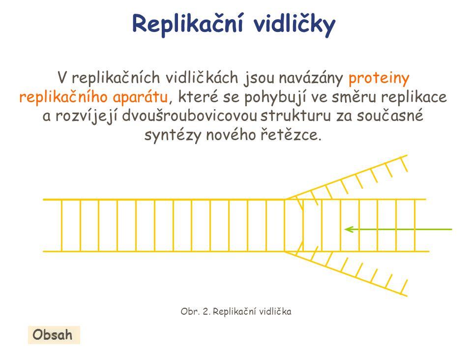 Replikační vidličky V replikačních vidličkách jsou navázány proteiny replikačního aparátu, které se pohybují ve směru replikace a rozvíjejí dvoušroubo