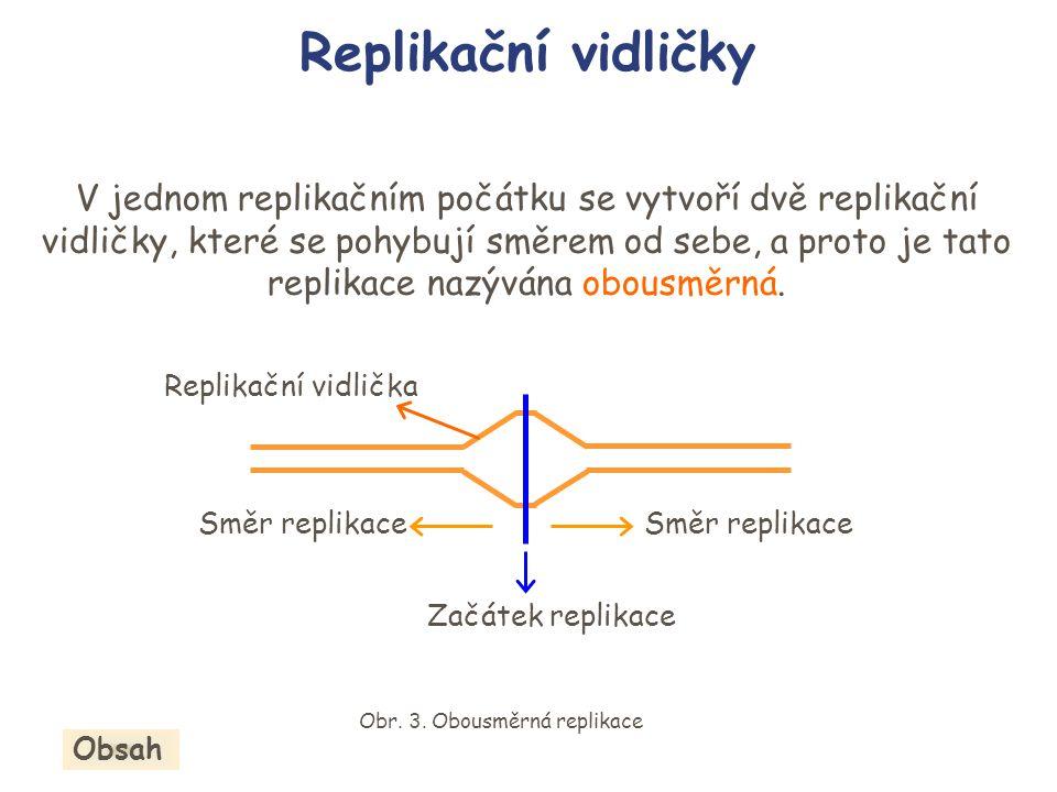 V jednom replikačním počátku se vytvoří dvě replikační vidličky, které se pohybují směrem od sebe, a proto je tato replikace nazývána obousměrná. Repl