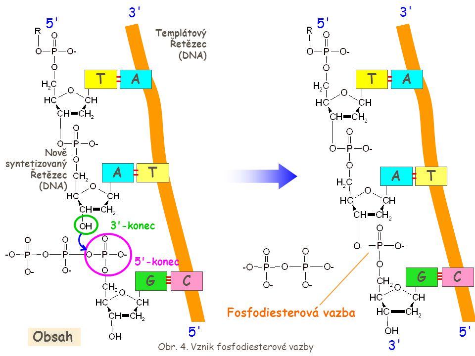 A GC T TA 5' 3' 5' Fosfodiesterová vazba Obr. 4. Vznik fosfodiesterové vazby Obsah 3'-konec 5'-konec A GC T TA Templátový Řetězec (DNA) 5' 3' 5' Nově
