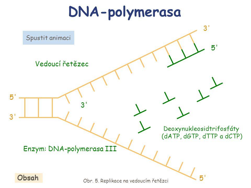 DNA-polymerasa 3' Enzym: DNA-polymerasa III Spustit animaci Deoxynukleosidtrifosfáty (dATP, dGTP, dTTP a dCTP) Obr. 5. Replikace na vedoucím řetězci O