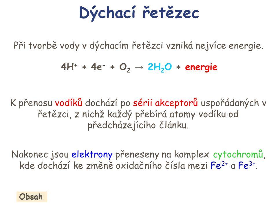 Dýchací řetězec K přenosu vodíků dochází po sérii akceptorů uspořádaných v řetězci, z nichž každý přebírá atomy vodíku od předcházejícího článku. Nako