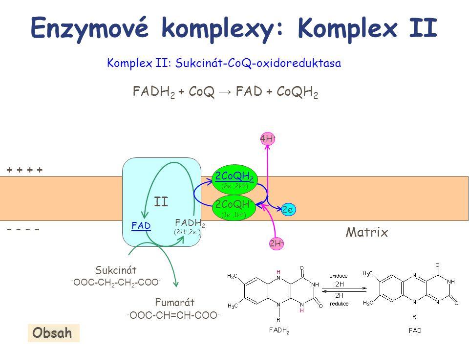 Enzymové komplexy: Komplex II II Sukcinát - OOC-CH 2 -CH 2 -COO - Fumarát - OOC-CH=CH-COO - + + - - Matrix 2e - FAD FADH 2 (2H +,2e - ) 2CoQH. (1e -,1