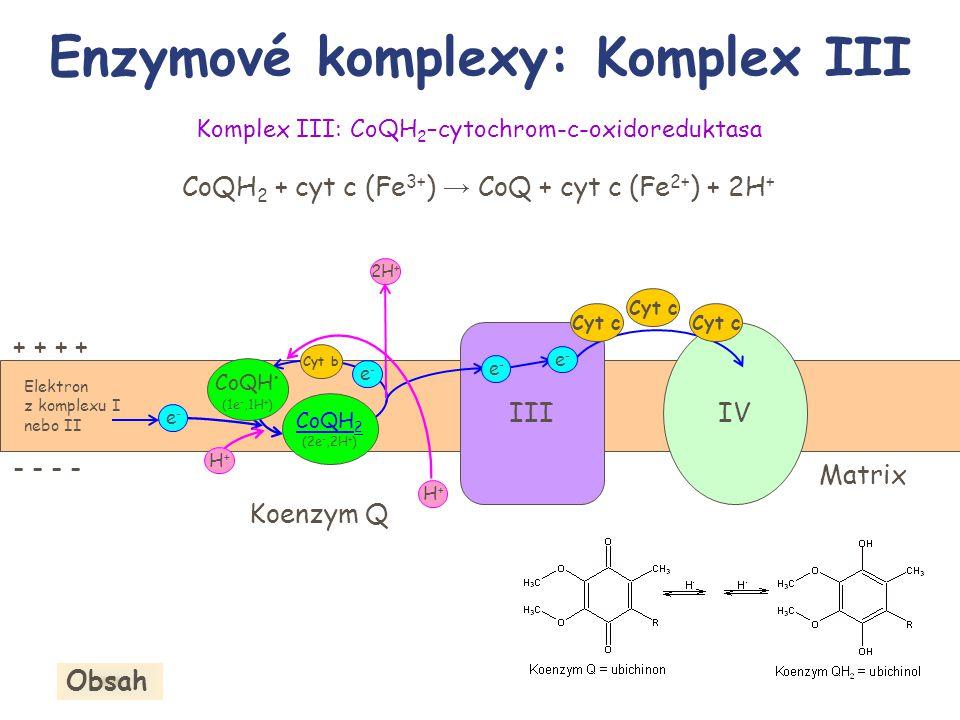 Elektron z komplexu I nebo II IV Komplex III: CoQH 2 –cytochrom-c-oxidoreduktasa CoQH 2 + cyt c (Fe 3+ ) → CoQ + cyt c (Fe 2+ ) + 2H + Enzymové komple