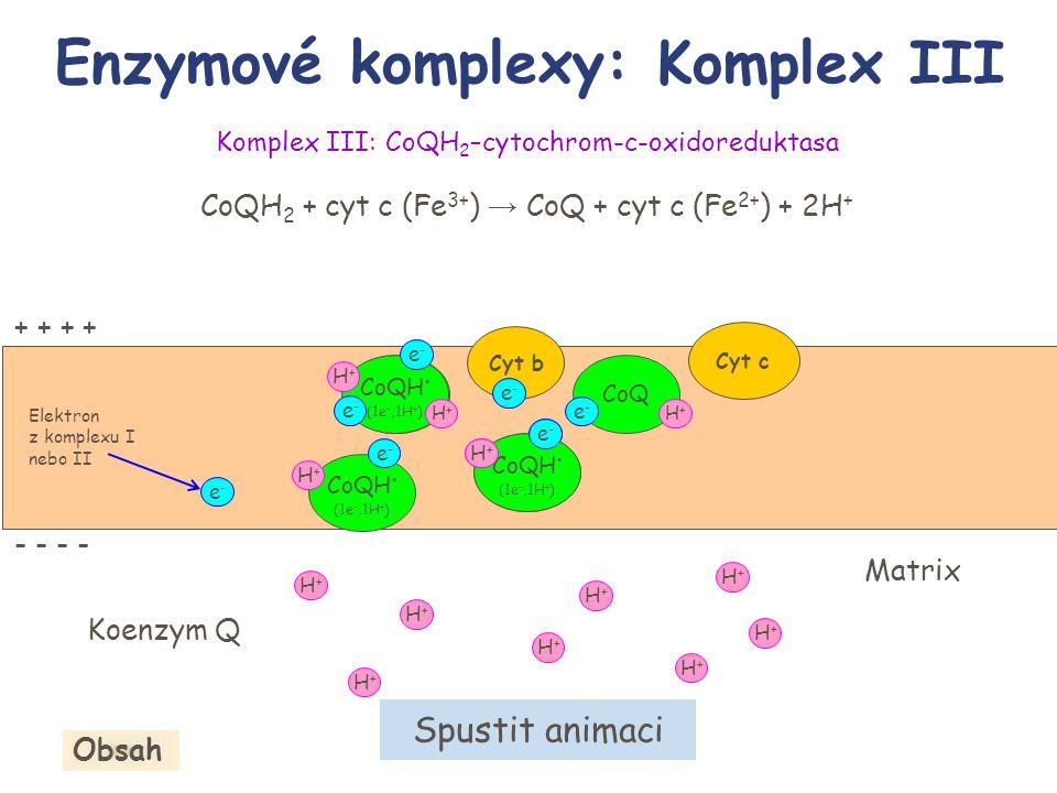 Elektron z komplexu I nebo II Komplex III: CoQH 2 –cytochrom-c-oxidoreduktasa CoQH 2 + cyt c (Fe 3+ ) → CoQ + cyt c (Fe 2+ ) + 2H + Enzymové komplexy: