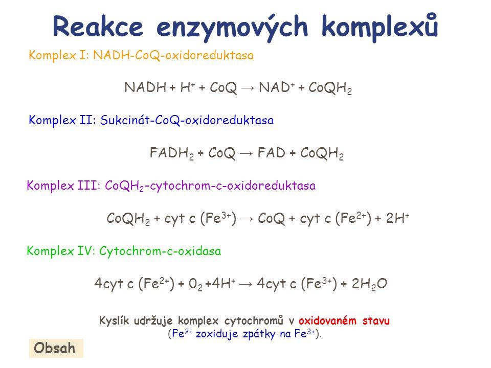 Reakce enzymových komplexů Komplex I: NADH-CoQ-oxidoreduktasa Komplex II: Sukcinát-CoQ-oxidoreduktasa Komplex III: CoQH 2 –cytochrom-c-oxidoreduktasa