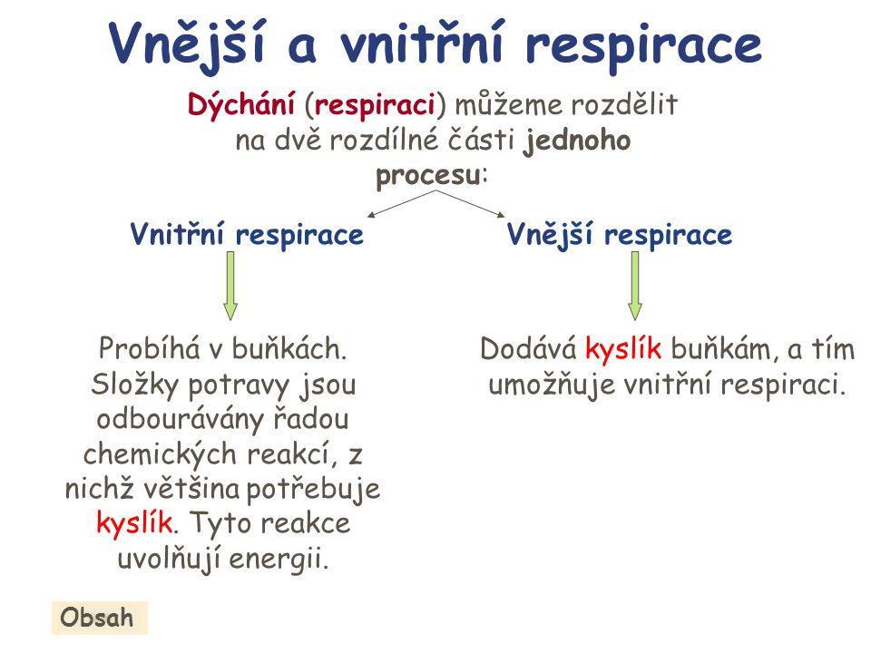 Dýchání (respiraci) můžeme rozdělit na dvě rozdílné části jednoho procesu: Vnitřní respiraceVnější respirace Dodává kyslík buňkám, a tím umožňuje vnit