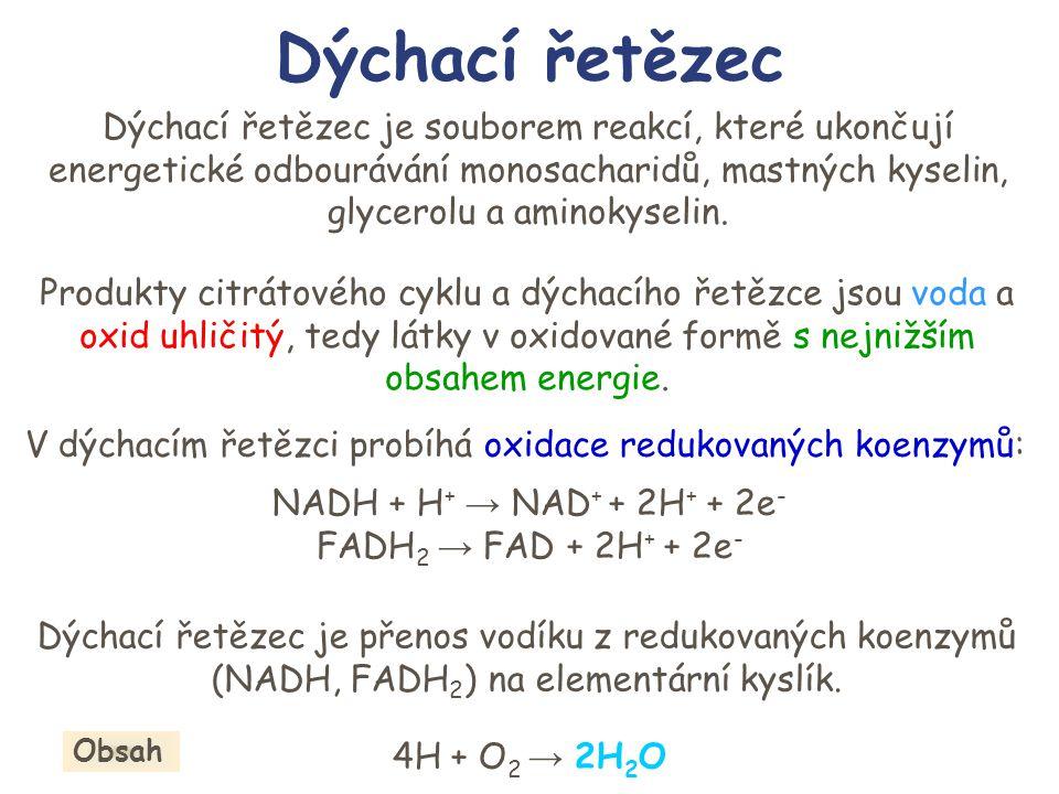 Enzymové komplexy I NADH-CoQ oxidoreduktasa II Sukcinát-CoQ oxidoreduktasa III CoQH 2 – cytochrom c oxidoreduktasa IV Cytochrom c oxidasa V ATP-syntasa Matrix IIIIV + + - - 2H 2 O 4H + 4e - 4H + 2e - V H+H+ ADP + P ATP H+H+ 2e - II e-e- FADH 2 FAD e-e- 2H + CoQH 2 CoQH.