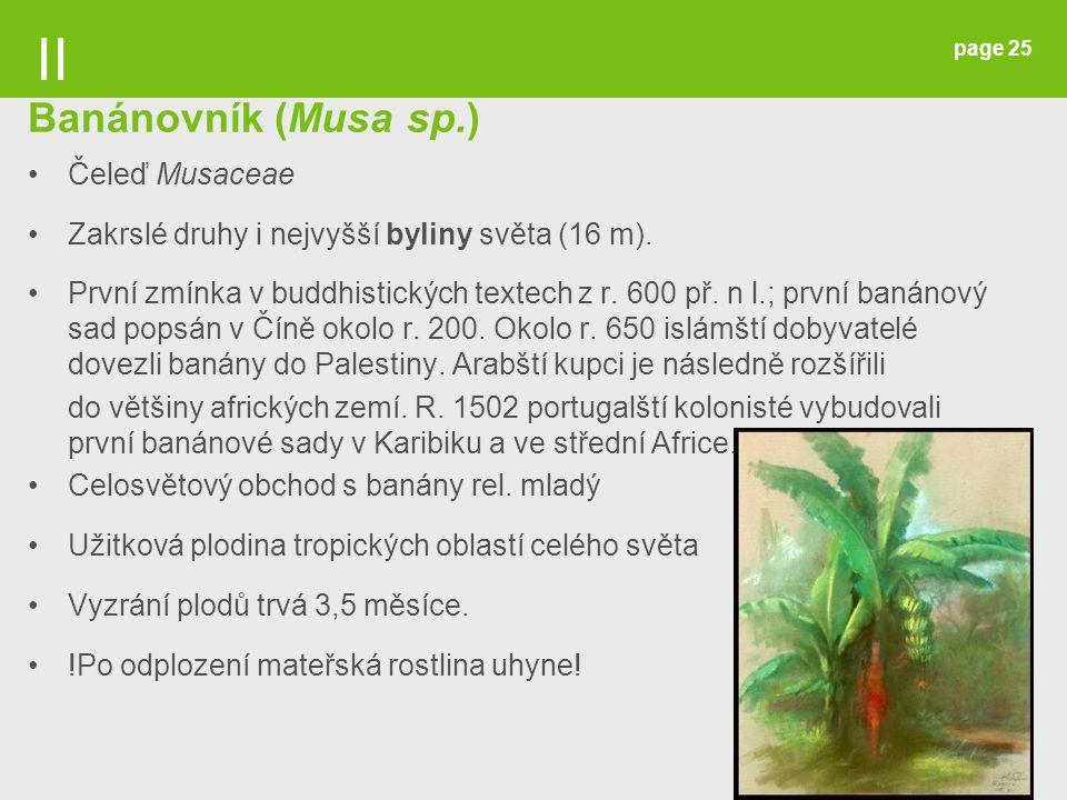 page 25 Banánovník (Musa sp.) Čeleď Musaceae Zakrslé druhy i nejvyšší byliny světa (16 m). První zmínka v buddhistických textech z r. 600 př. n l.; pr