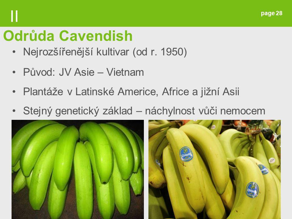 page 28 Nejrozšířenější kultivar (od r. 1950) Původ: JV Asie – Vietnam Plantáže v Latinské Americe, Africe a jižní Asii Stejný genetický základ – nách